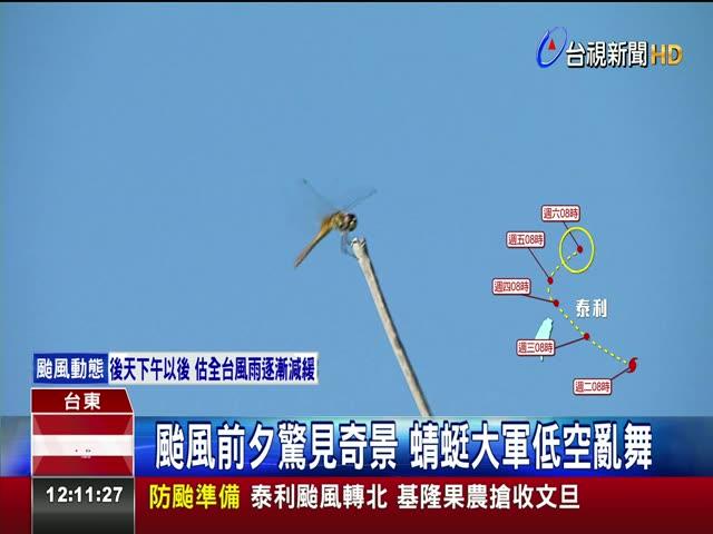 颱風前夕驚見奇景 蜻蜓大軍低空亂舞 低氣壓影響 成千上萬隻薄翅蜻蜓低飛