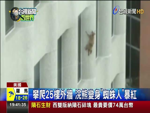 攀爬25樓外牆 浣熊變身蜘蛛人暴紅 蜘蛛浣熊秀絕技攻頂 民眾驚呼連連