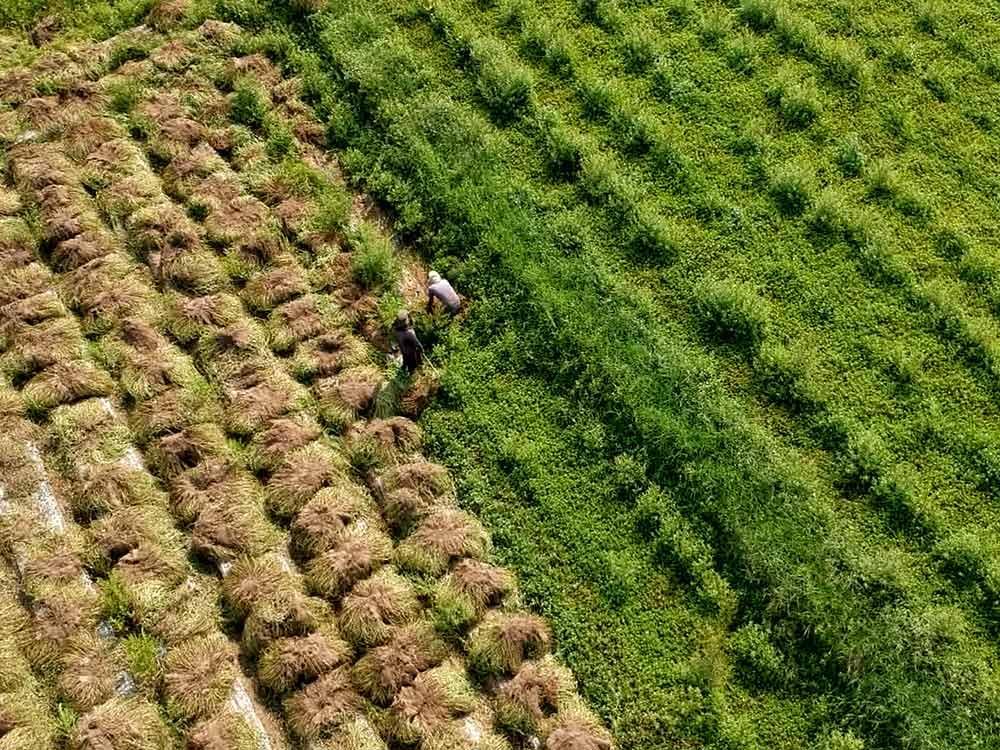 人口老化 農業缺工