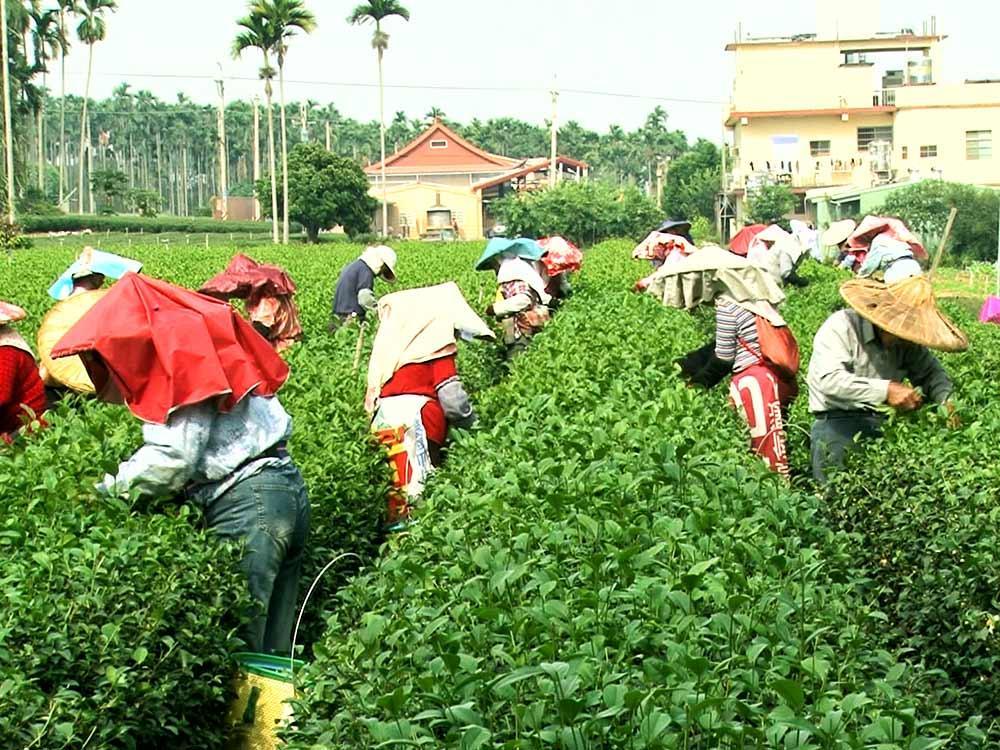農業發展 補助人力
