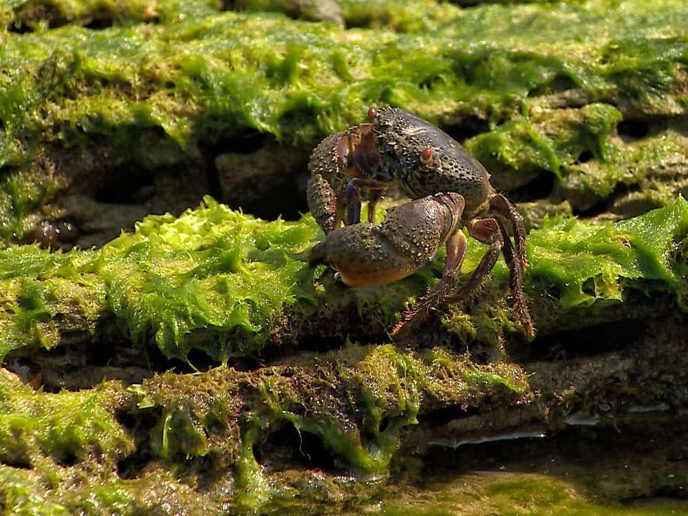 酷暑玩水 海藻銳減