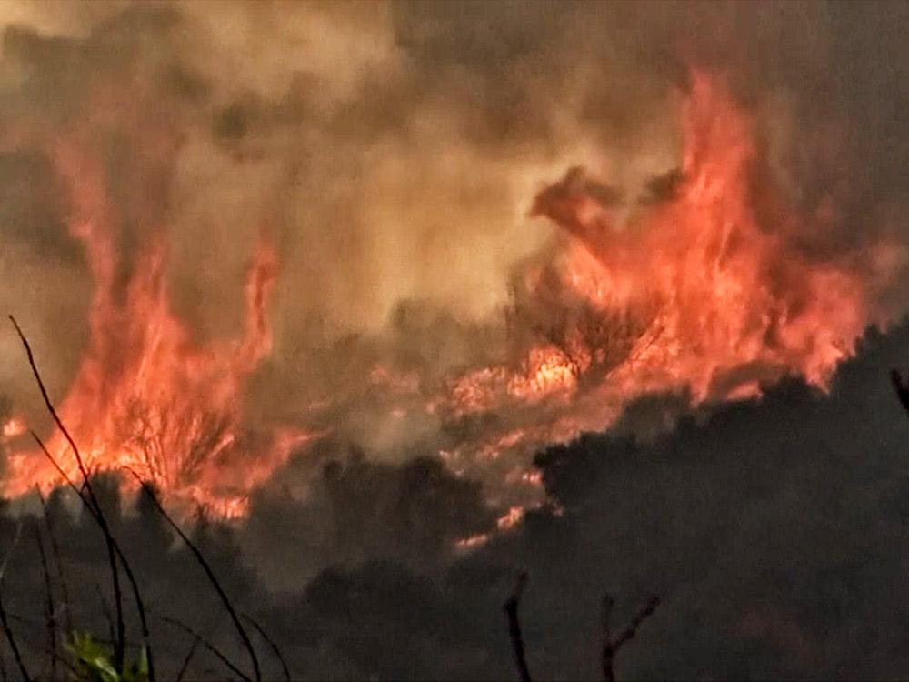 全球熱浪 林火不斷