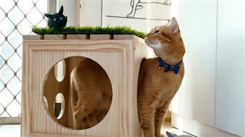 寵物用品 量身訂做創業夢
