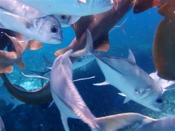 與鯊魚共舞