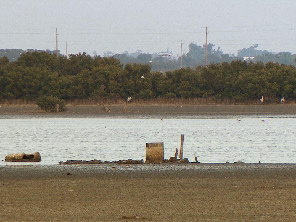 鹽灘地種電 生態難題