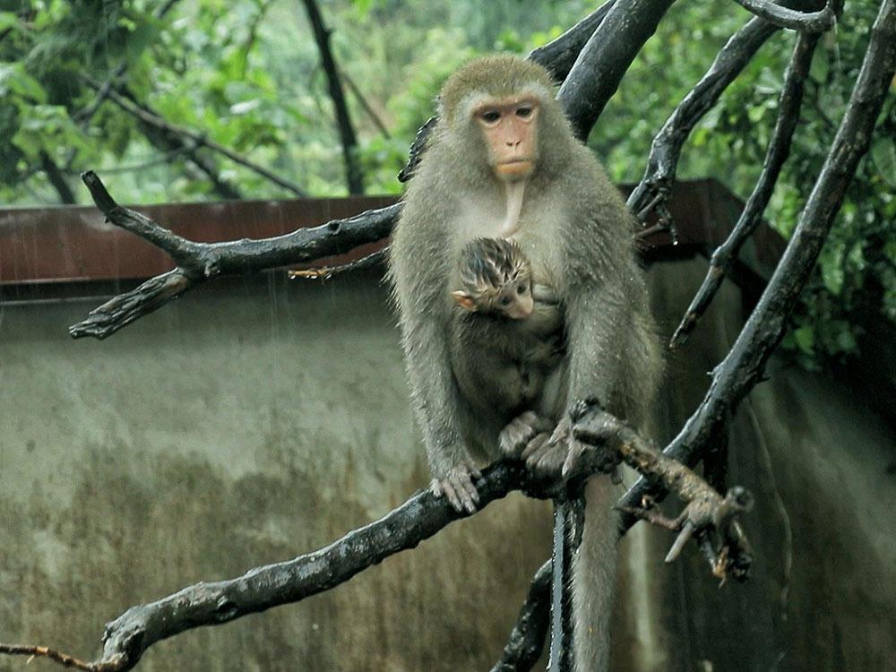 動物保護 人猴共處