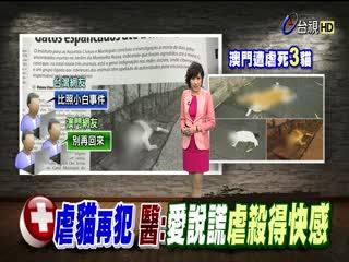 陳皓揚返鄉過年當地傳3街貓被虐死