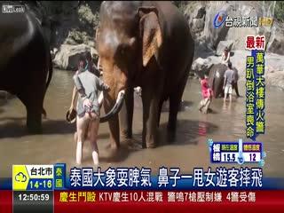 泰國大象耍脾氣鼻子一甩女遊客摔飛