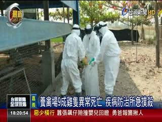 養禽場9成雞隻異常死亡疾病防治所急撲殺