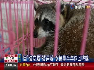 照顧不周浣熊被沒入 女潛收容所劫囚