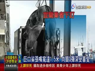700公斤重!漁民捕獲巨口鯊5.6萬售出