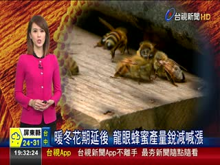 暖冬花期延後龍眼蜂蜜產量銳減喊漲