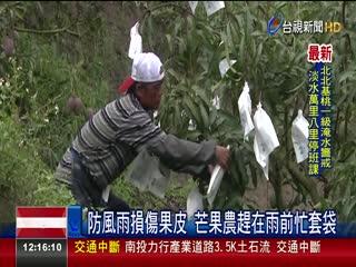 豪雨全台警戒!農民一早搶收稻米芒果