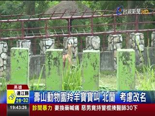 壽山動物園羚羊寶寶叫北蘭考慮改名