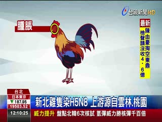 病毒變異適應高溫?炎夏屢傳禽流感
