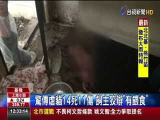 驚傳虐貓14死11傷飼主狡辯有餵食