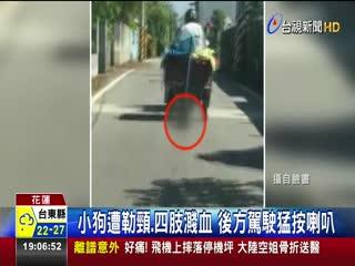 殘忍!男騎車拖行小狗地上滿是血腳印