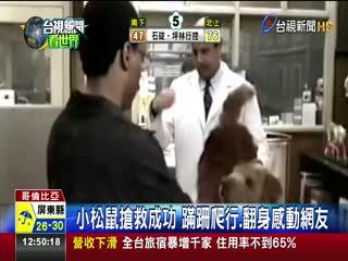哥國暖男搶救觸電松鼠CPR.心臟按摩救命