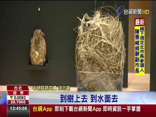 中研院新發現鳥巢特徵與鳥類演化相關
