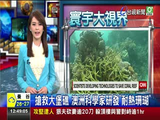 搶救大堡礁澳洲科學家研發耐熱珊瑚