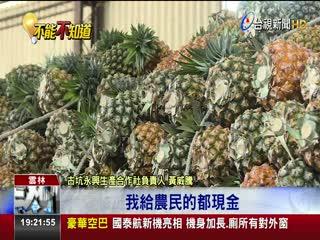 5萬斤鳳梨沒加工廠收農糧署挨批跳票