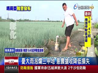 果農搶收紅棗蔥農調8台抽水機防颱