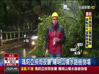 瑪莉亞挾雨夜襲陽明山積水路樹倒塌