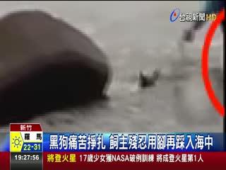 颱風天浪大黑狗遭丟入海飼主竟稱除蚤
