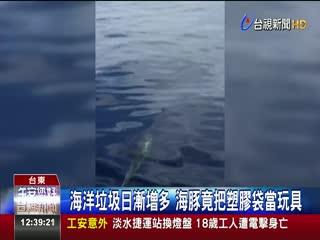海洋垃圾日漸增多海豚竟把塑膠袋當玩具