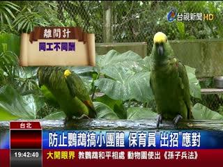 教鸚鵡和平相處動物園使出《孫子兵法》