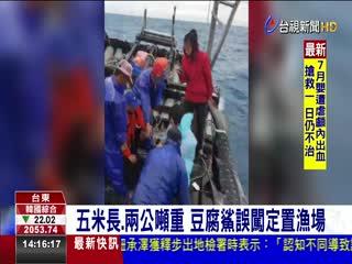 五米長.兩公噸重豆腐鯊誤闖定置漁場