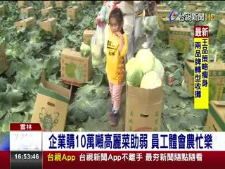 企業購10萬噸高麗菜助弱員工體會農忙樂
