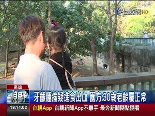 壽山動物園馬來熊雄雄吐血遊客目睹嚇傻
