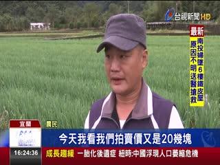 三星蔥價跌!農民自救省成本開放民眾摘採