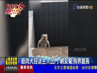 筋肉犬目送主人出門網友驚:狗界館長